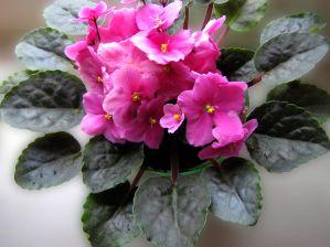 Как цветёт цветок рябчик